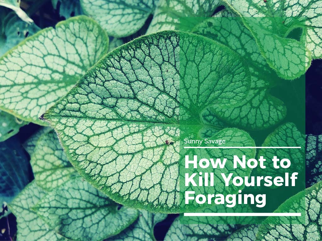 how not to kill yourself foraging free guide